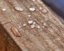 Влажность древесины, ее виды и способы определения