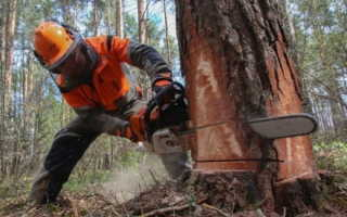 Ручная валка деревьев: инструкция и техника безопасности