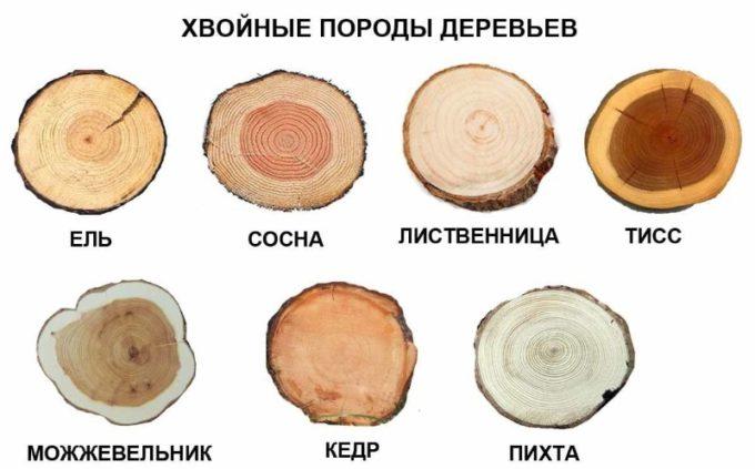 Хвойные породы древесины