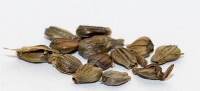 Семена граба