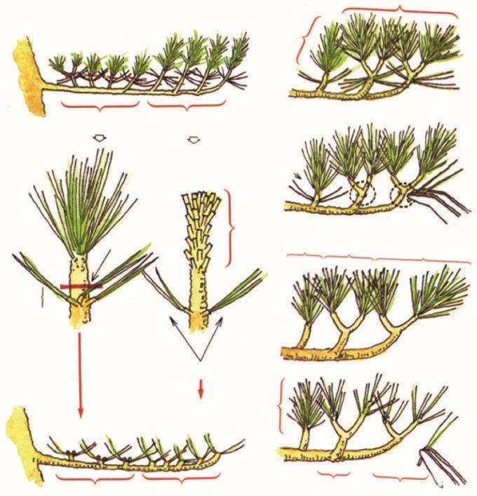 Схема для обрезки Ниваки