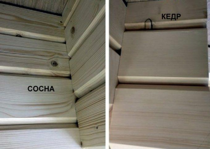 Различие древесины кедра и сосны
