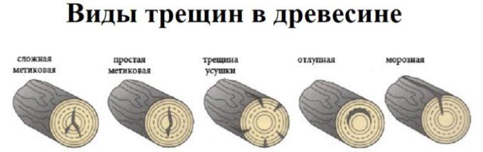 Виды трещин в древесине