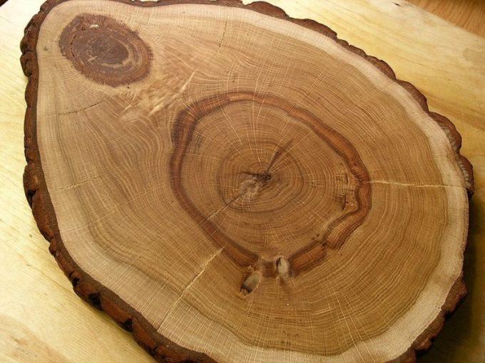 Срез древесины