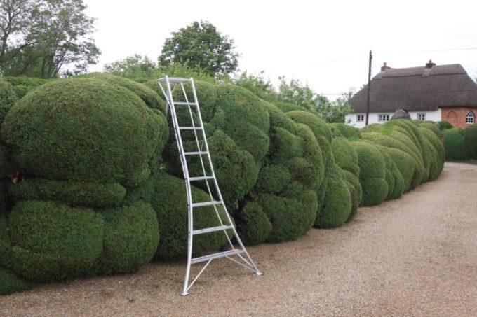 Изгородь из ивы