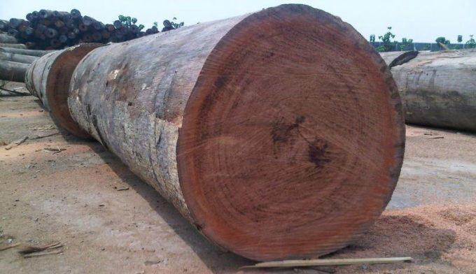 Древесина породы Керуинг