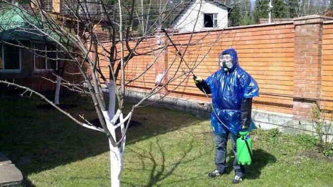 Защитная одежда при обработке дерева медным купоросом