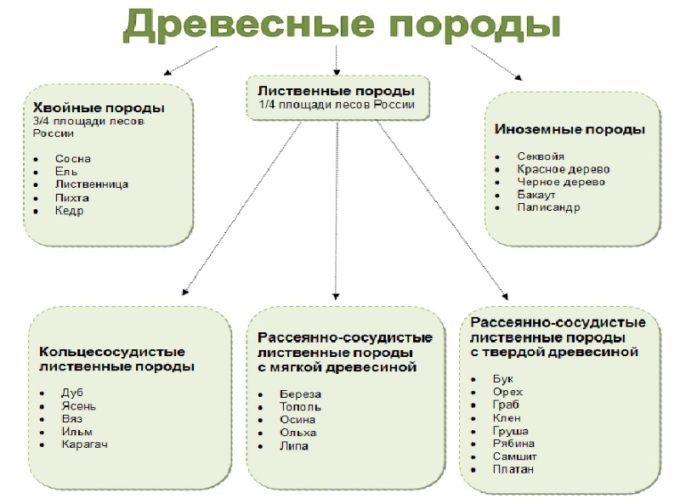 Классификация пород древесины