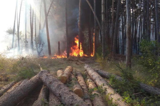 Древесина после пожара