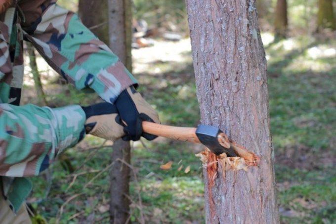 Валка дерева с помощью топора