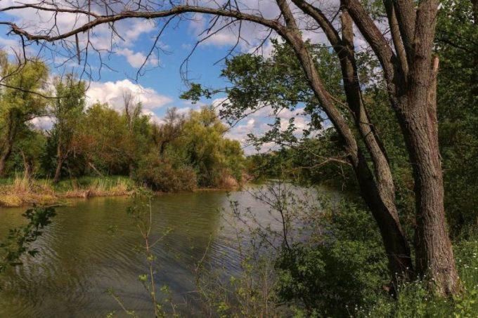Вязы на берегу реки