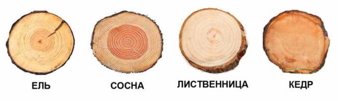 Древесина хвойных деревьев