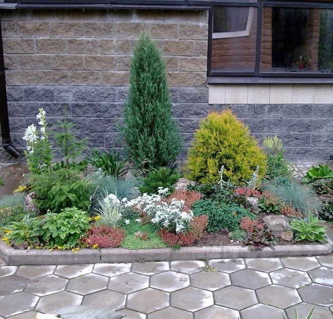 Можжевельник Блю Эрроу в саду