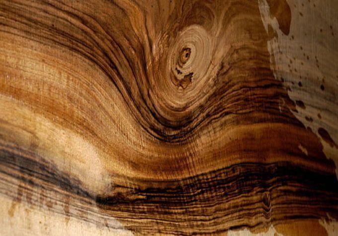 Завиток древесины