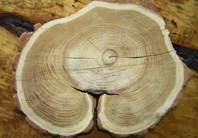 Прорость древесины