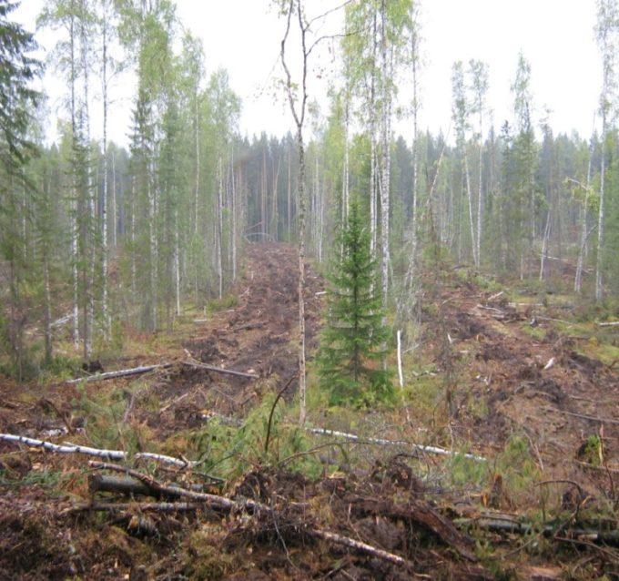Рубки ухода за лесом