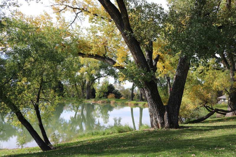 Тополь в парке