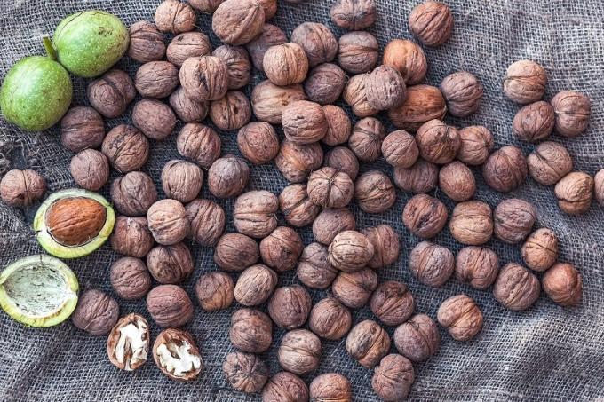 Подготовка семян грецкого ореха к посадке